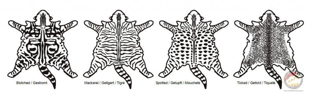 Kedilerde Irk, Renk ve Desen Kodları - Alfa Kedi Irkları Koruma ve Denetleme Derneği
