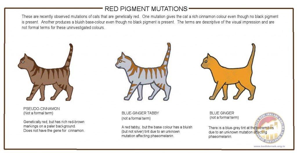 Recently Noted Mutations of Red PigmentAlfa Kedi Irkları Koruma ve Denetleme Derneği