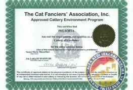 Kedi Federasyon Cattery Uygulama Farkları Nelerdir?