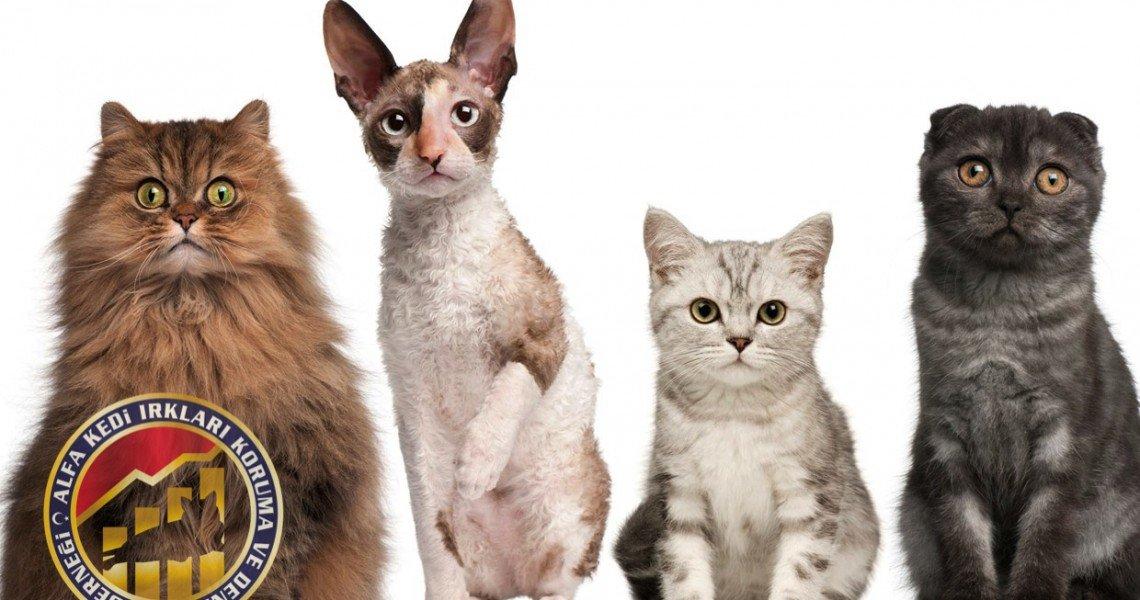 Kedi Federasyon : Dernek Cattery Uygulama Farkları_001