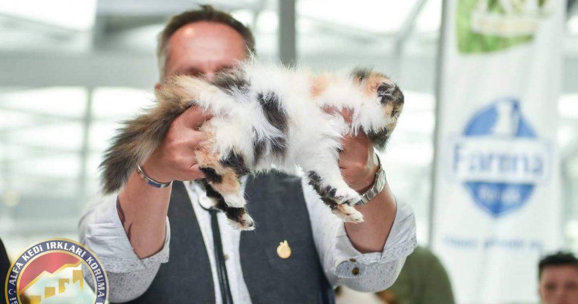 Akın Fer Kedi Yarışması