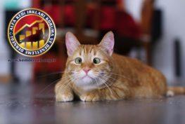 Kedilerde Beyin Hastalıkları Hakkında Merak Ettiğiniz Her Şey Alfa Kedi Irkları Koruma ve Denetleme Derneği Kedidernek