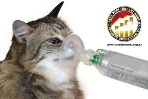 Kedilerde Solunum Yolu Hastalıkları Hakkında Merak Ettiğiniz Her Şey Solunum Sorunu Alfa Kedi Irkları Koruma ve Denetleme Derneği