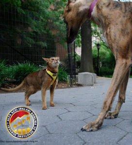 Kedilerde Temel Eğitim Hakkında Merak Ettikleriniz Kediniz Bir Köpek Değildir Alfa Kedi Irkları Koruma ve Denetleme Derneği