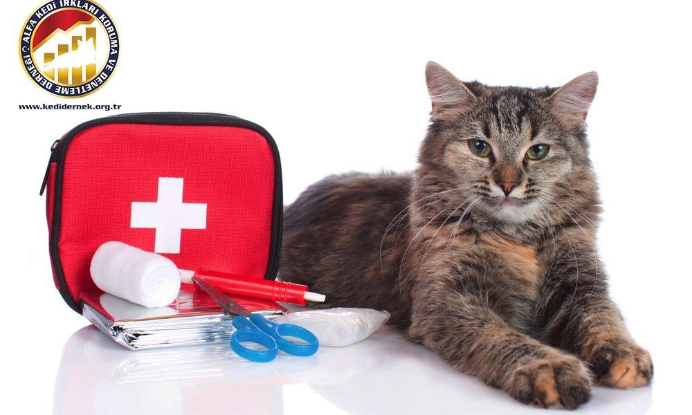 Kedilerde Yaşam Kurtaran İlkyardım Hakkında Merak Ettiğiniz Her Şey Alfa Kedi Irkları Koruma ve Denetleme Derneği