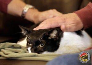 Kedinin Yaşamının Sonu-Alfa