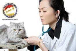 Kediniz için Bir Veteriner Seçmek Alfa Kedi Irkları Koruma ve Denetleme Derneği