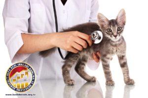 Kedinizi Muayene Etmek Hakkında Her Şey Alfa Kedi Irkları Koruma ve Denetleme Derneği Kedinizi Muayene Etmek