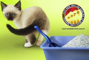Kedinizi Nasıl Eğitebilirsiniz? Kum Kabı Eğitimi Alfa Kedi Irkları Koruma ve Denetleme Derneği