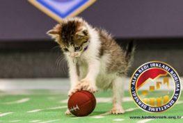 Kedinizle Yapabileceğiniz Aktiviteler Alfa Kedi Irkları Koruma ve Denetleme Derneği