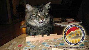 Kedinizle Yapabileceğiniz Aktiviteler Kedimin Aktif Olması İçin Alfa Kedi Irkları Koruma ve Denetleme Derneği