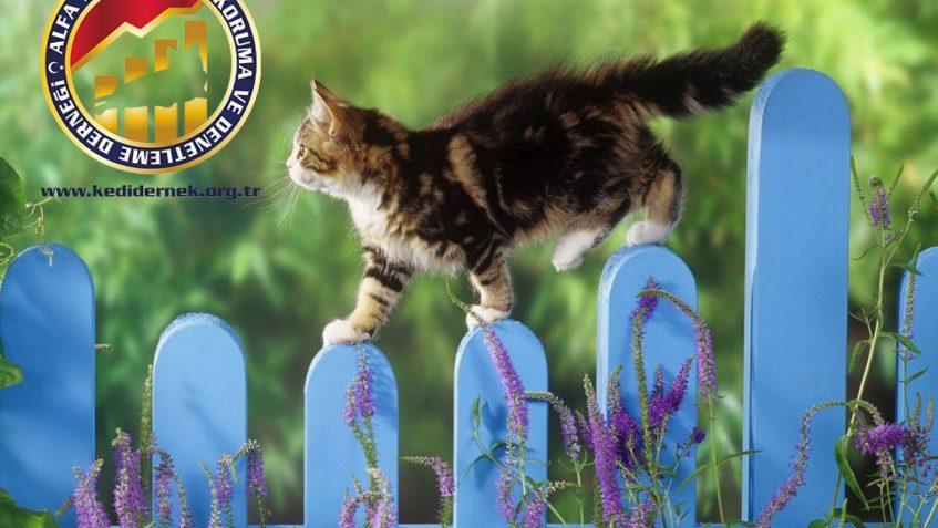 Sokağa Çıkan Kedilerde Dikkat Edilmesi Gerekenler Alfa Kedi Irkları Koruma we denetleme derneği
