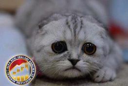 Sorumlu Kedi Sahibi Olmak Hakkında Merak Ettikleriniz Alfa Kedi Irkları Koruma ve Denetleme Derneği