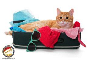 Kedilerde Yeni Deneyimler Alfa Kedi Irkları Koruma ve Denetleme Derneği Tatil