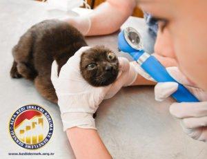 Göz Hastalıkları Alfa Kedi Irkları Koruma ve Denetleme Derneği1