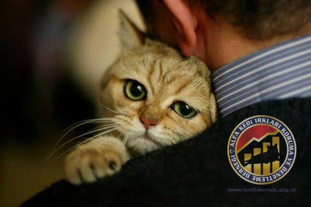 Örnek Kedi Arkadaşı