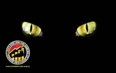 Yavru Kedilerin Gözleri